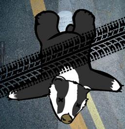 Dead Badger